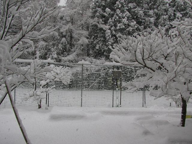 10.4.19雪