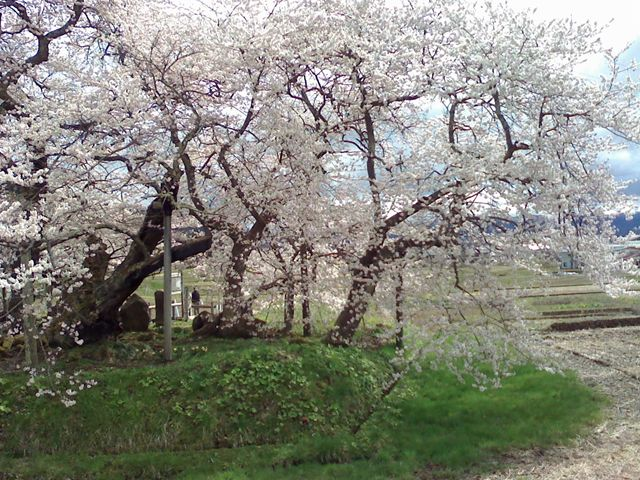 10.4.28石部桜-1