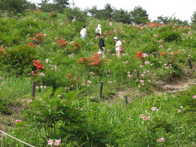 10.6.13姫サユリの丘