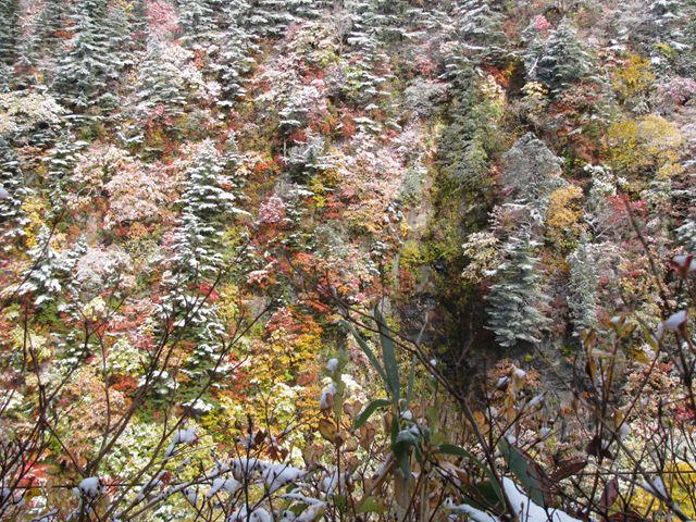 10.10.27初雪、白糸の滝