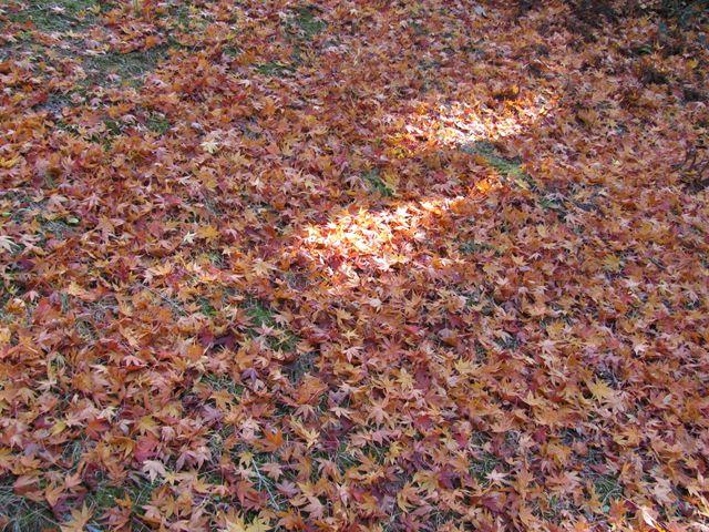 10.11.12-15湖畔の森やすらぎの小路