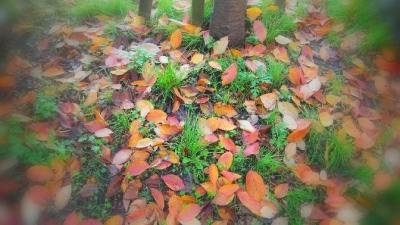 05 赤坂の落ち葉