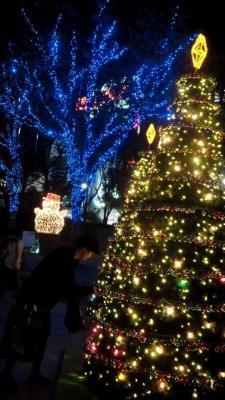 05 青い木