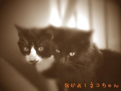 04 仲良し猫ちゃん