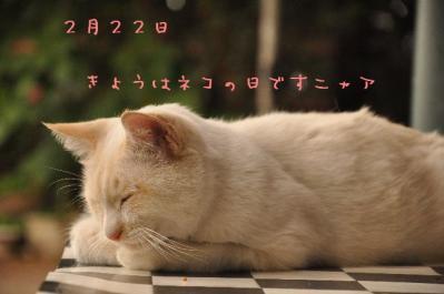 04  ネコの日
