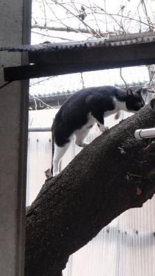 04天神猫木登り