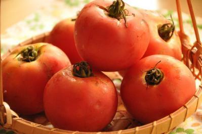 04  木村さんトマト