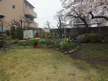 満開の桜7