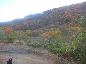 創生の森4
