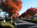 F1001054秋の新座墓園