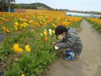 お花つみ1