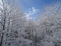 森の様子1