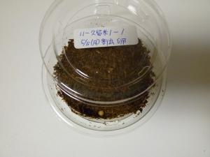 11久留米1卵変化