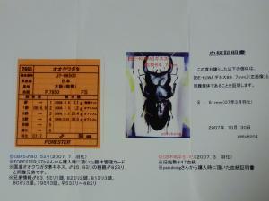 購入YG幼虫ルーツ証明書