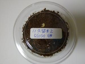 11久留米2番孵化