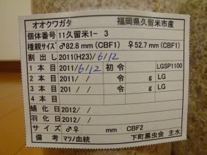 11久留米1-3ラベル