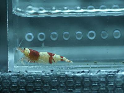 2011-11-20-keisoku1.jpg