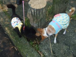 2010_0525菜々ちゃん初散歩0021