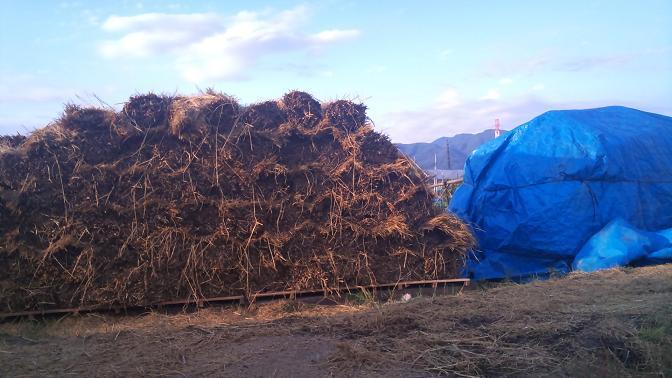 ワラは放射性物質未検出安全安心な山梨県甲府市産を。