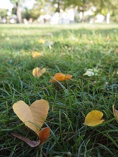 気付けばもう秋!