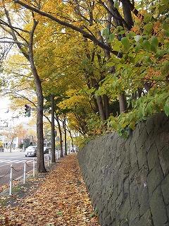 神宮の落ち葉