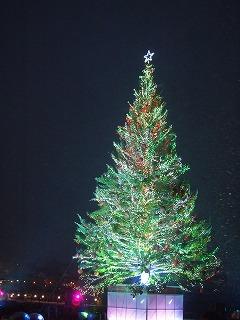 函館 ベイエリアのツリー