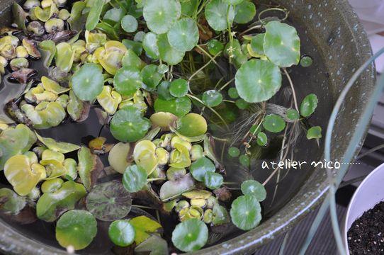 水鉢201211