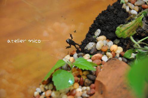 kaeru_20120609163403.jpg