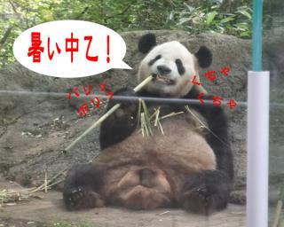 pandaDSCF0501.jpg