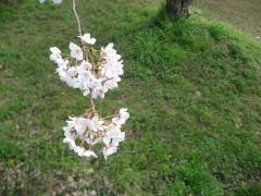 2010_03-05+149_convert_20100401111844.jpg