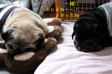 一緒にゆっくり寝てね~v^^