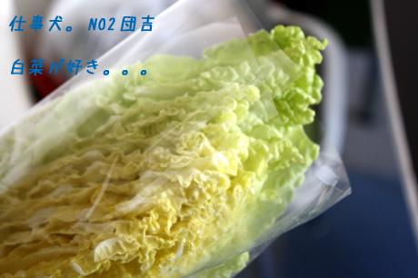 白菜が好き・・・だそうで。。。