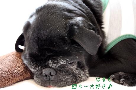 春は団吉大好きだものね~!