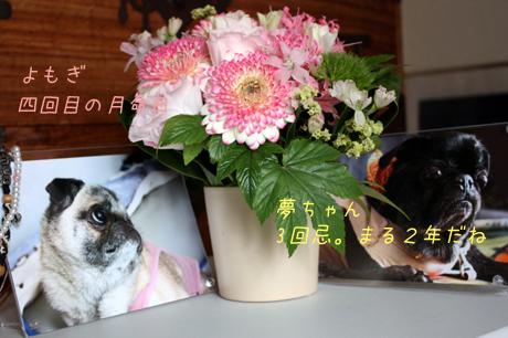 蓬と夢々吉へのお花。だよ