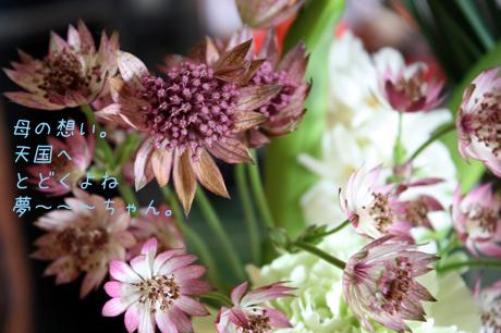 夢~ちゃんの。お花だよ~♪