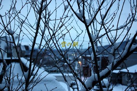 朝。雪が少し積もってた!