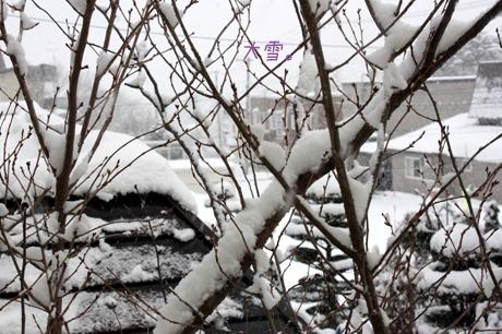 雪がしんしん・・・大雪!