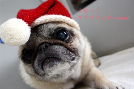 2011年12月。サンタさんに変身。蓬