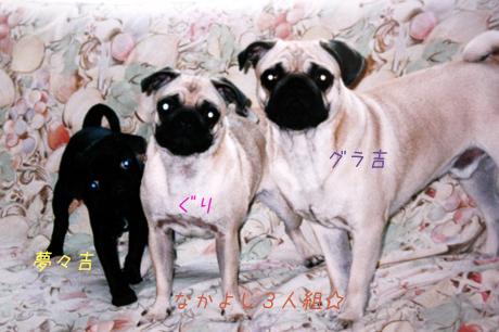 夢々も仲間いり・・・3人組はいつも楽しい♪