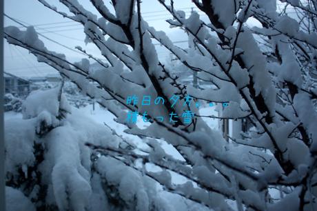 昨日の夕方。。。凄い雪でした