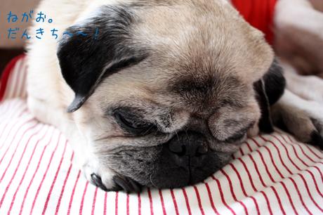 寝顔。団吉~可愛い~♪