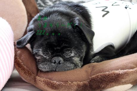 寝てます。。。夢に豆