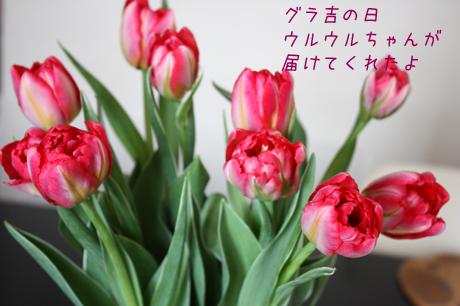 ウルウルちゃんがお花を持って来てくれたよ