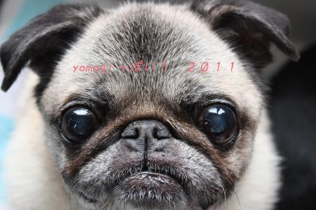 2011年12月の蓬ひめ様。