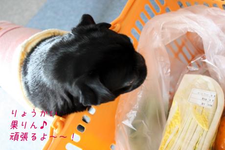 果りん★がんばるよ~~v^^