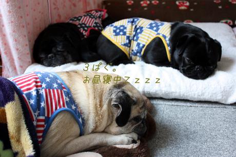 3ぱぐ★お昼寝の図・・・しゃ~わせ!