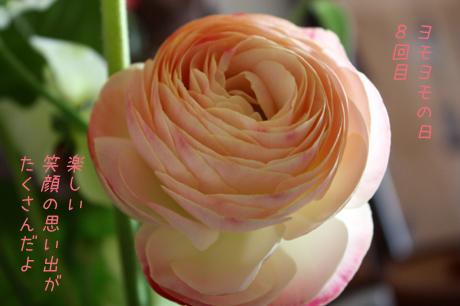 ミースケが選んだ。お花だよ