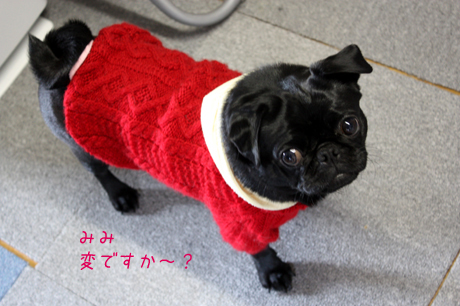 ヨモヨモのお下がり・・・赤いセーター