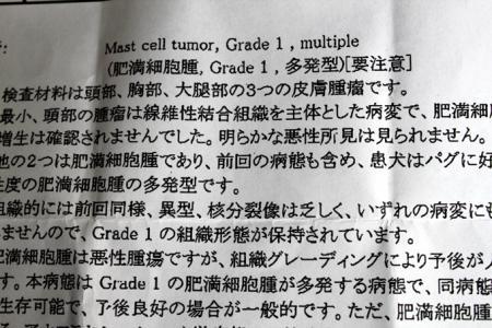 3-17-7.jpg