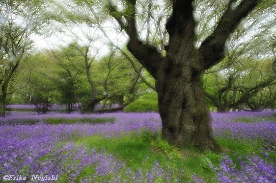 紫の森へのいざない